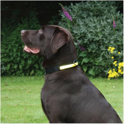 """Rosewood Night Dog Walking Hi-Visibility Yellow Dog Collar 12"""" - 20"""" (Medium)"""