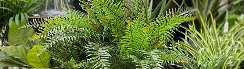 faux-plants-offer.jpg