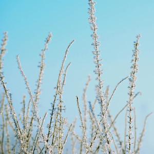 Hoar Frost Blue