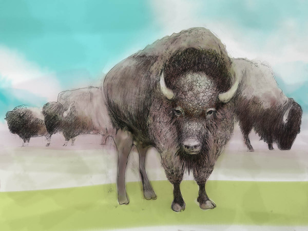 Colored Bison