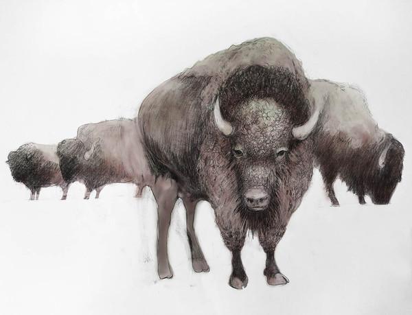 Colored Bison V2