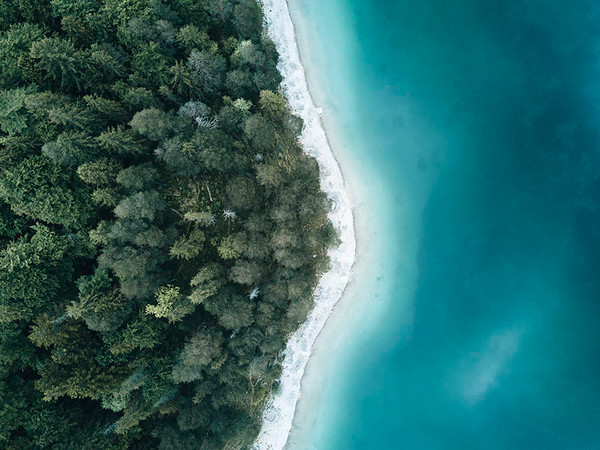 Where the Forest Meets the Coast