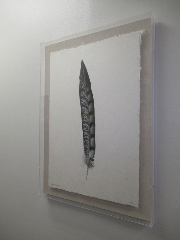"""Feather Study #11"" Acrylic Shadowbox - Gallery Collection Exclusive"