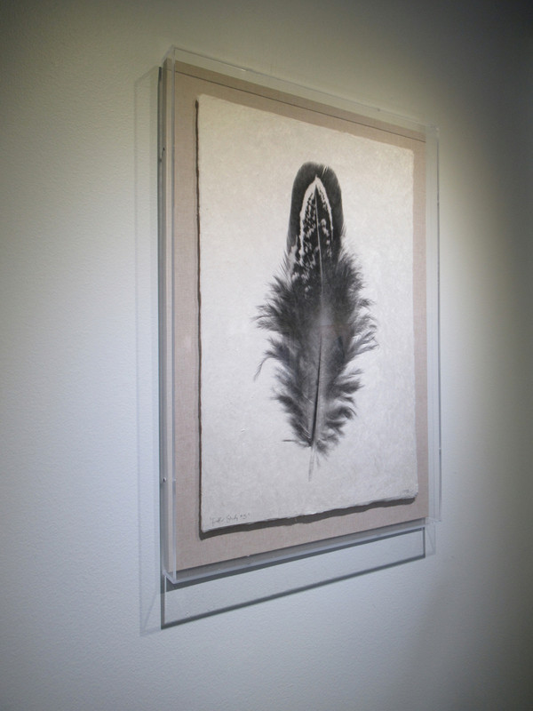 """Feather Study #3"" Acrylic Shadowbox - Gallery Collection Exclusive"