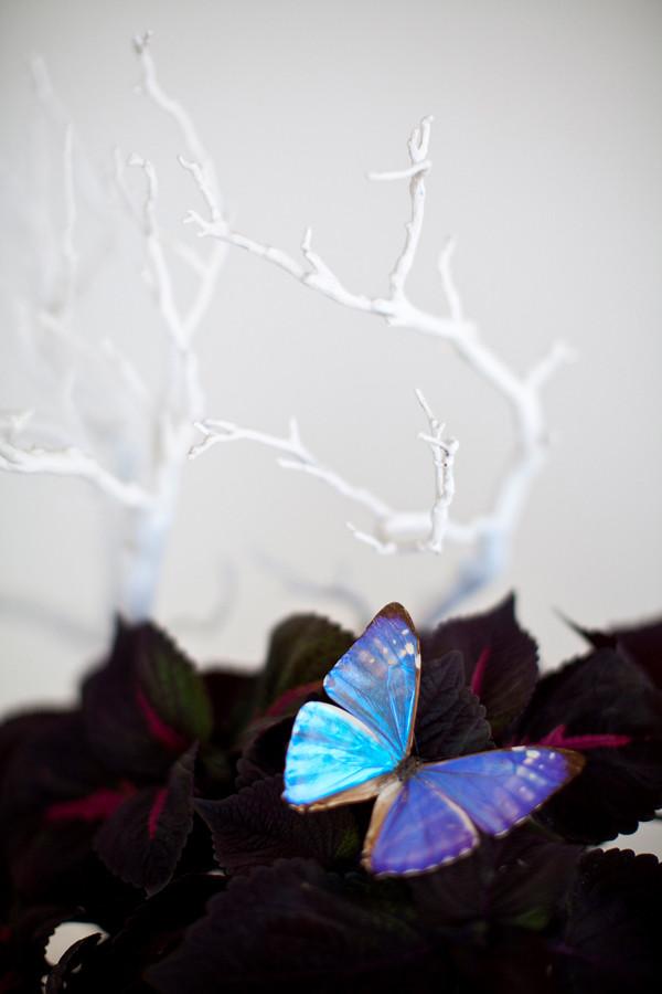 Velvet Butterfly