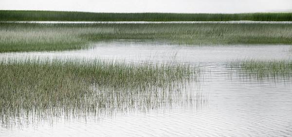 Coastal Marshlands C