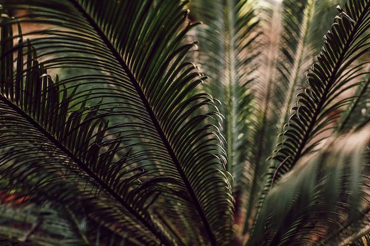 Shake your palm palms