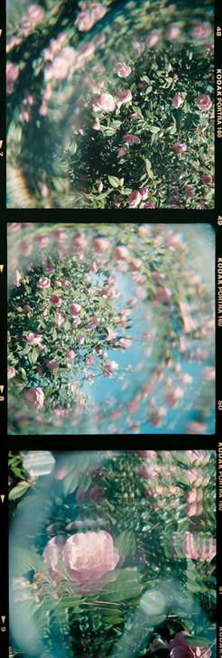 Kodak Flowers 2