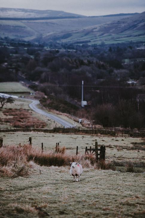 Countryside Winter Gathering V