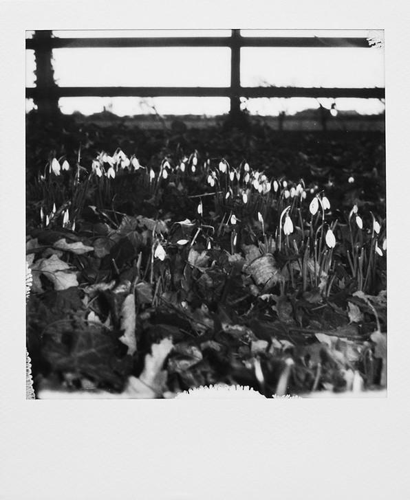 Polaroid Morning