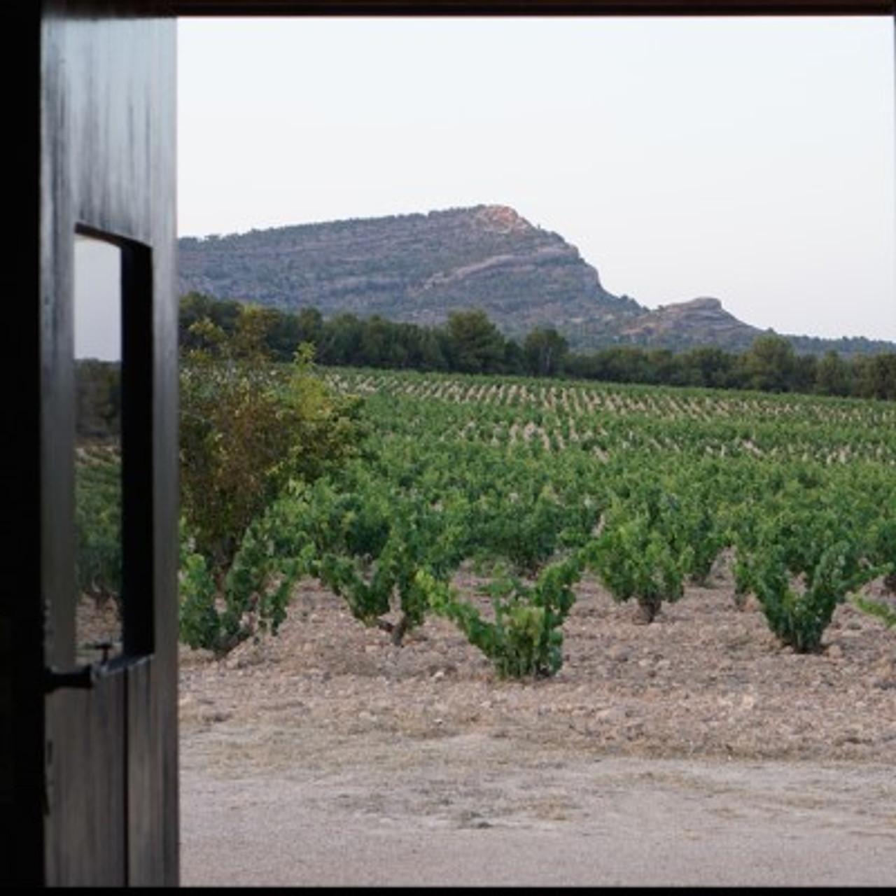 Arabí vineyard