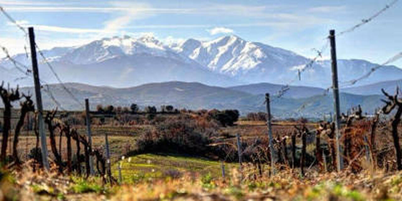 Domaine Lafage, Cuvee Centenaire Blanc 2019