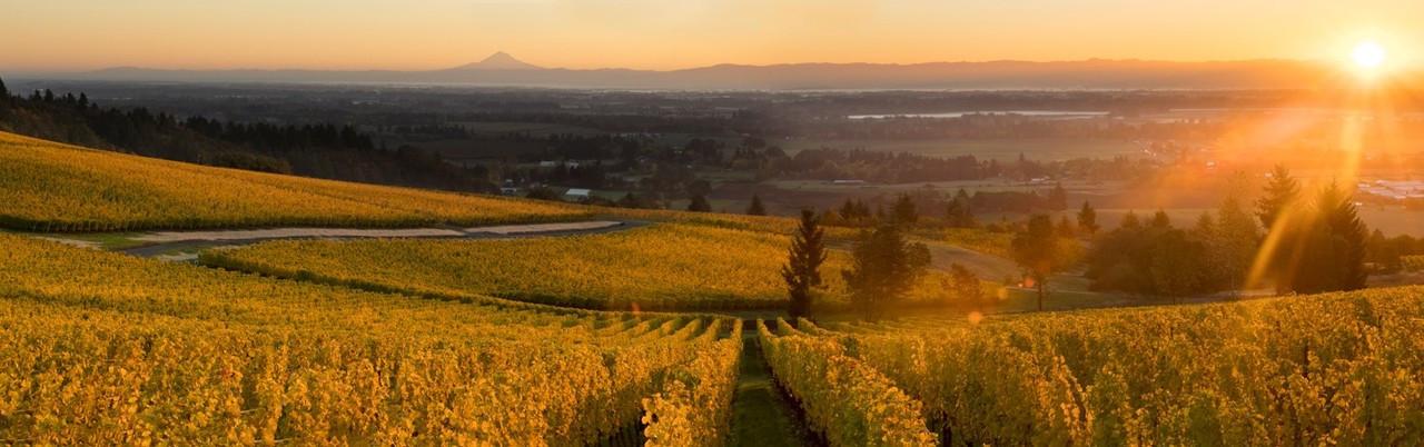 Cristom Vineyards, Pinot Noir, Mt. Jefferson, Willamette Valley 2016