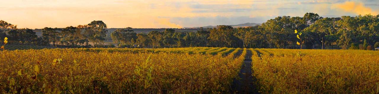 Polish Hill Vineyard