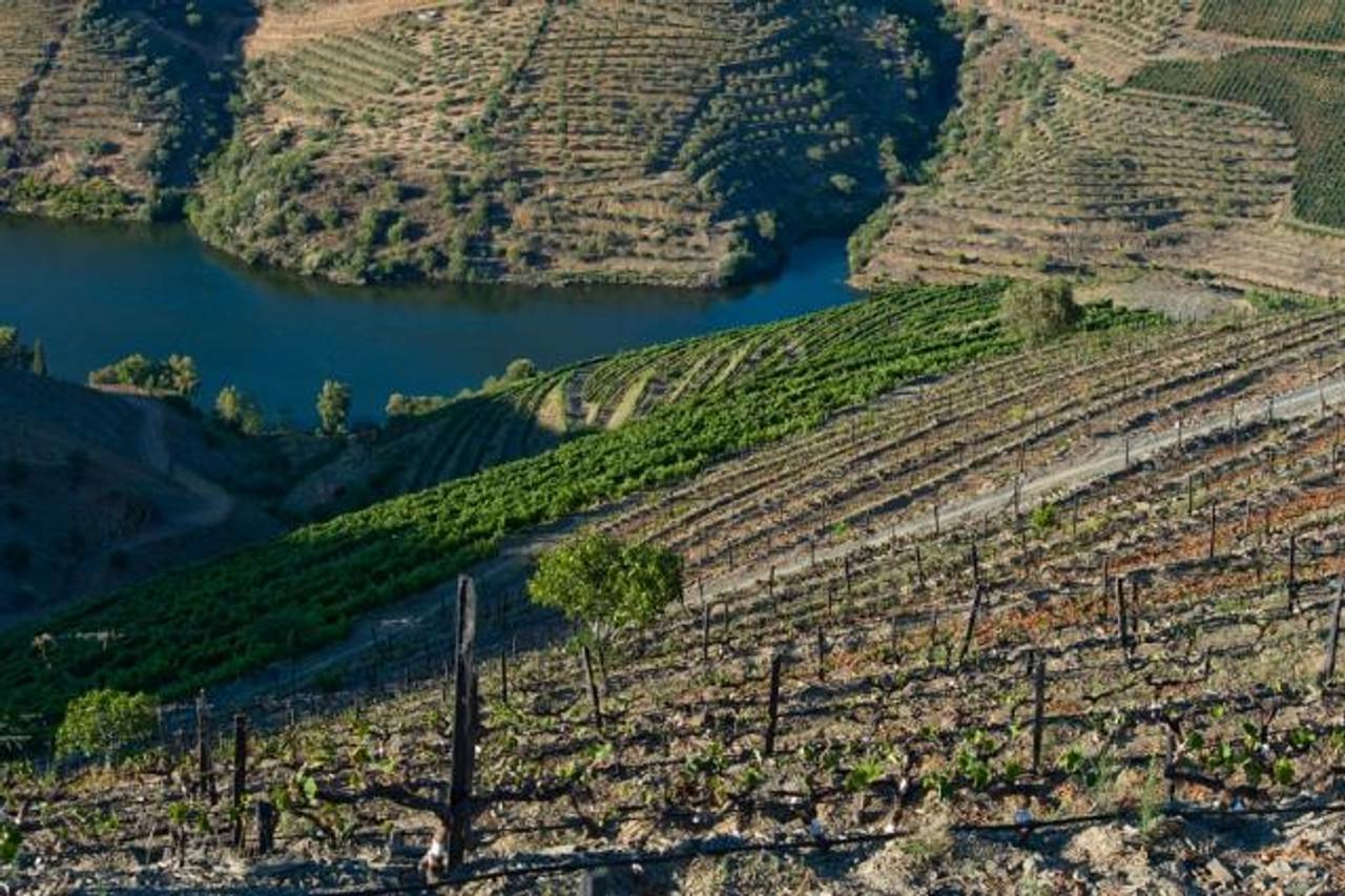 Duorum Vineyards