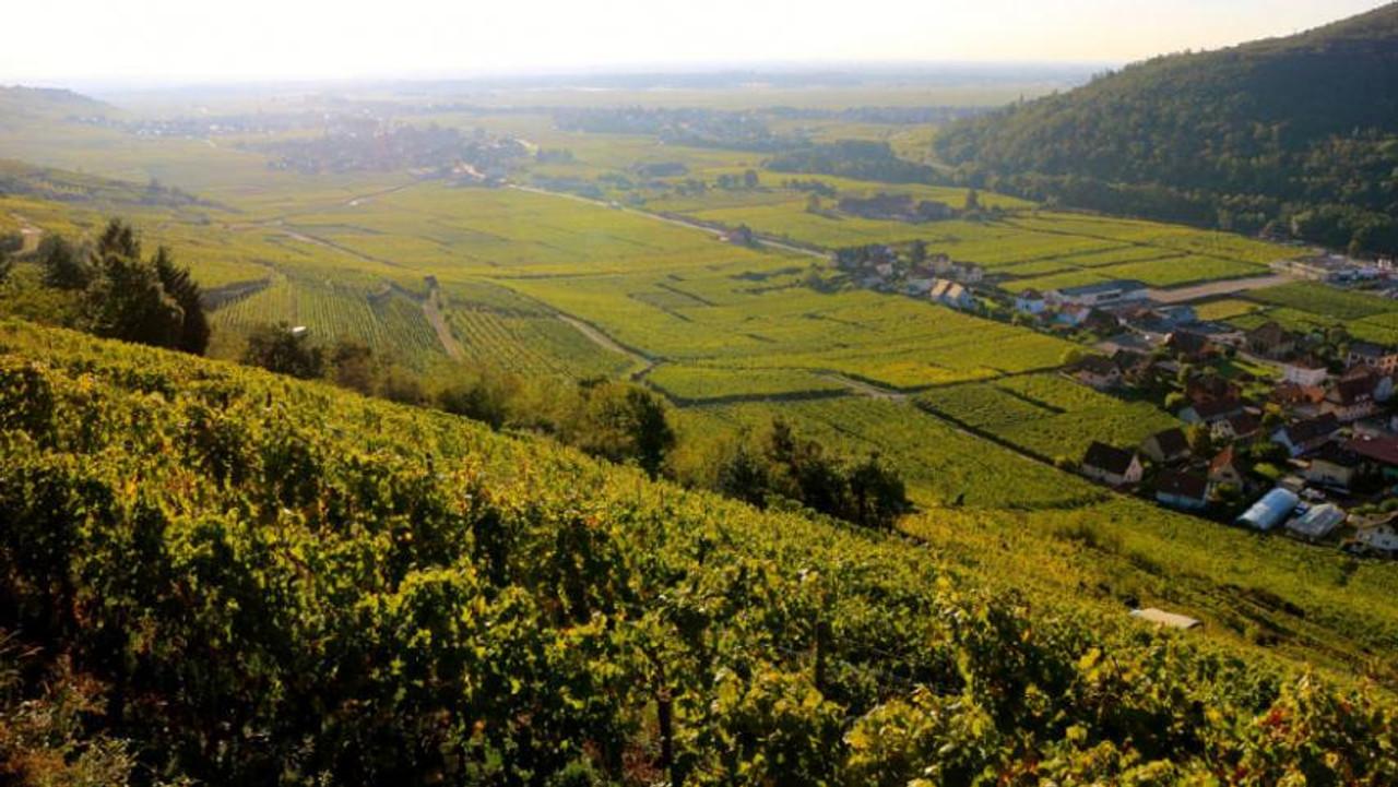 Trimbach, Pinot Noir Réserve Personnelle 2014