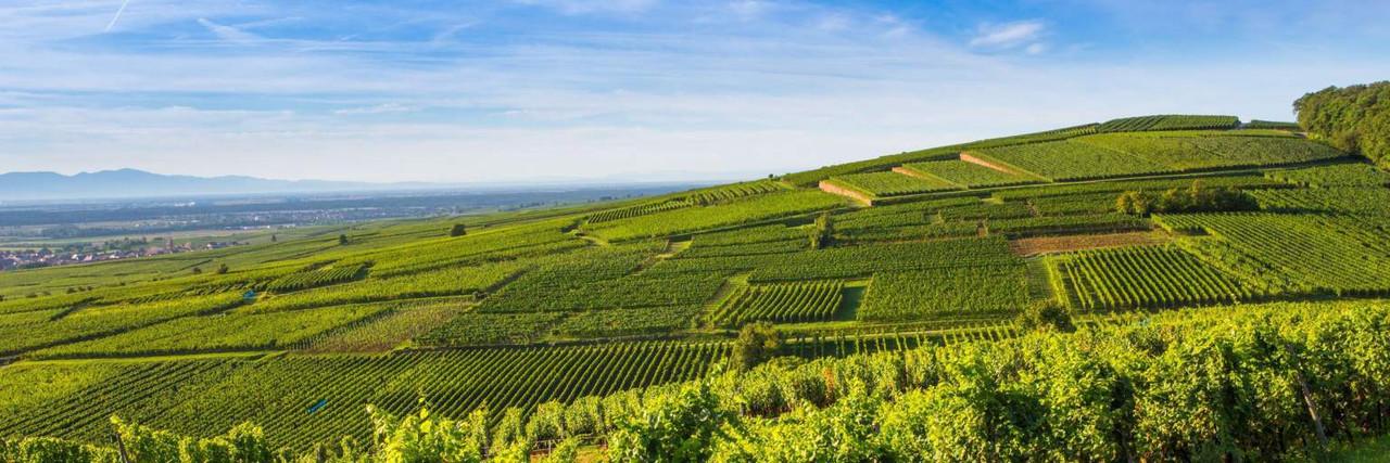 Barmes-Buecher,  Pinot Noir Vieilles Vignes 2007