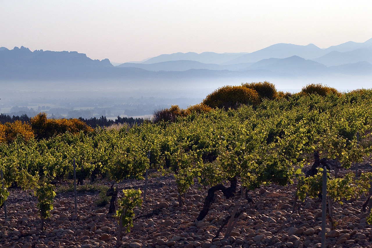 Chateauneuf-du-Pape in the morning