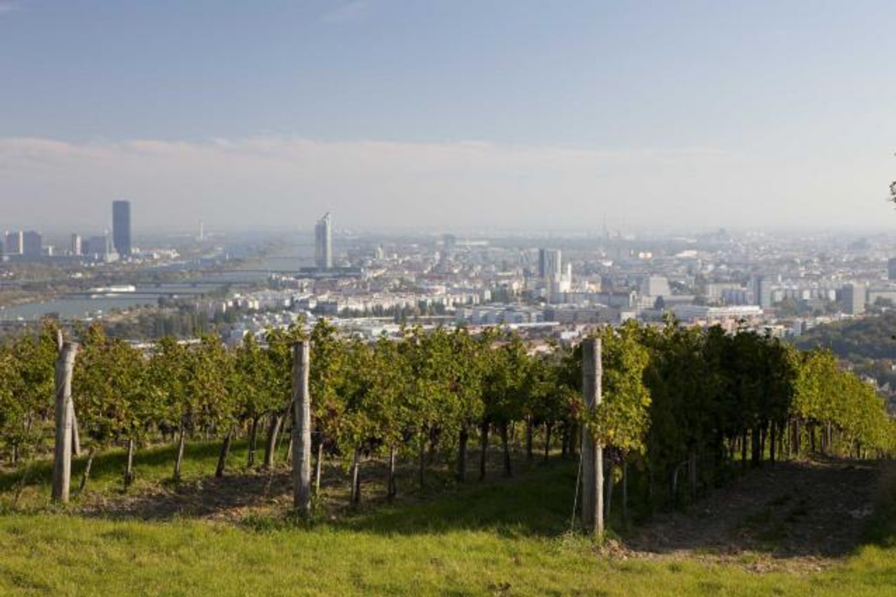 Vineyards within the city limits of Vienna