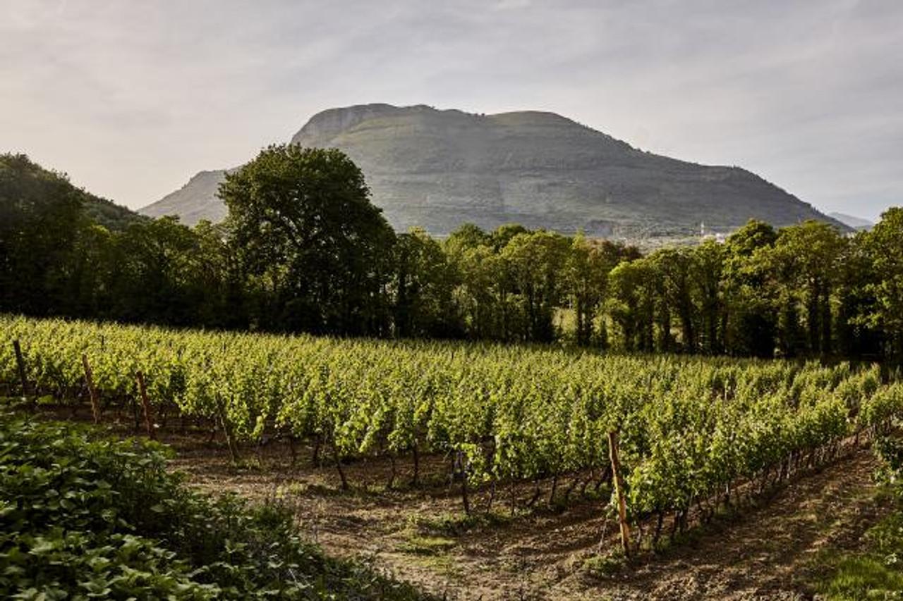Montevetrano Vineyard