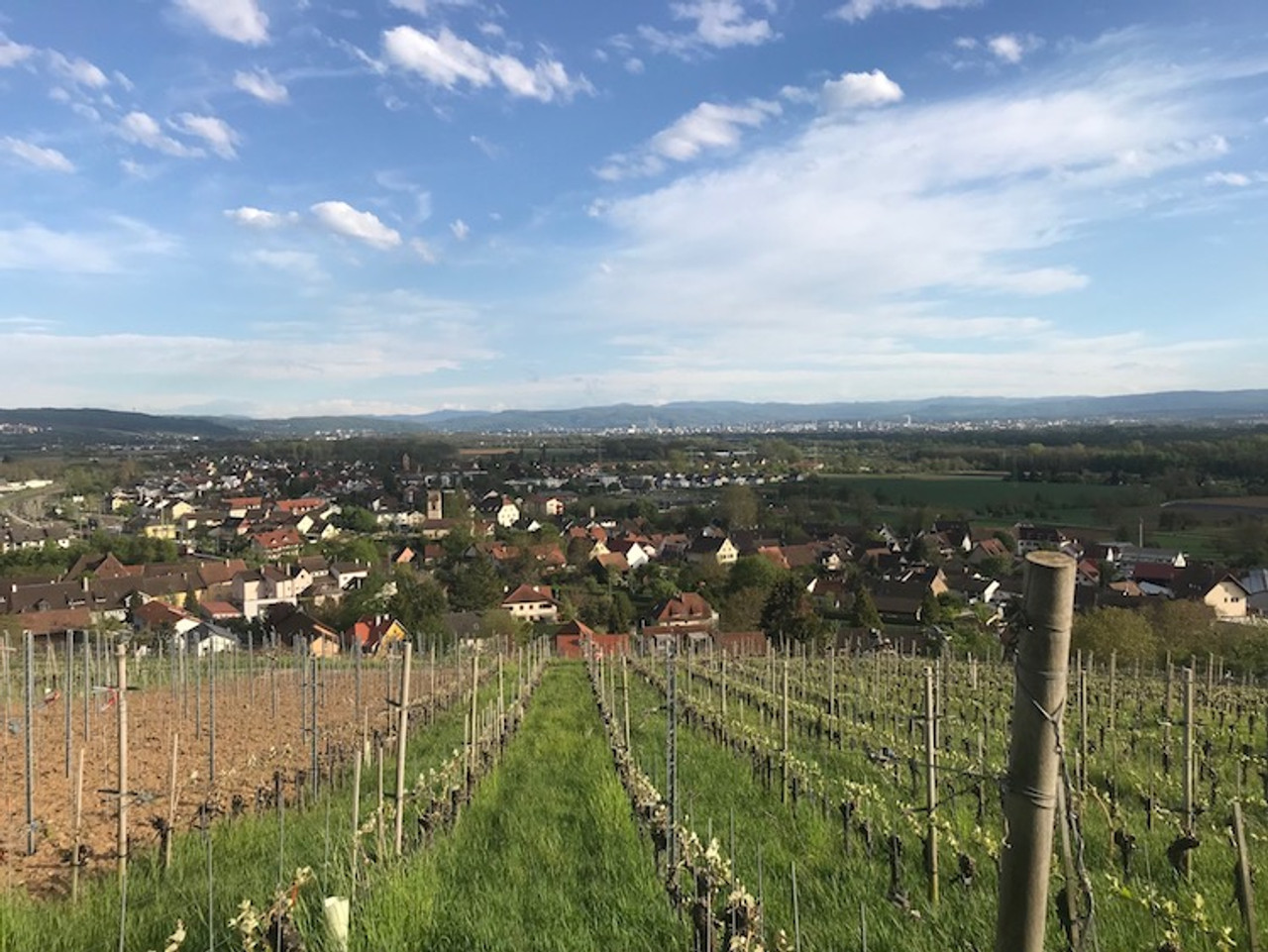 View of Basel from Ziereisen's south facing vineyard in Baden
