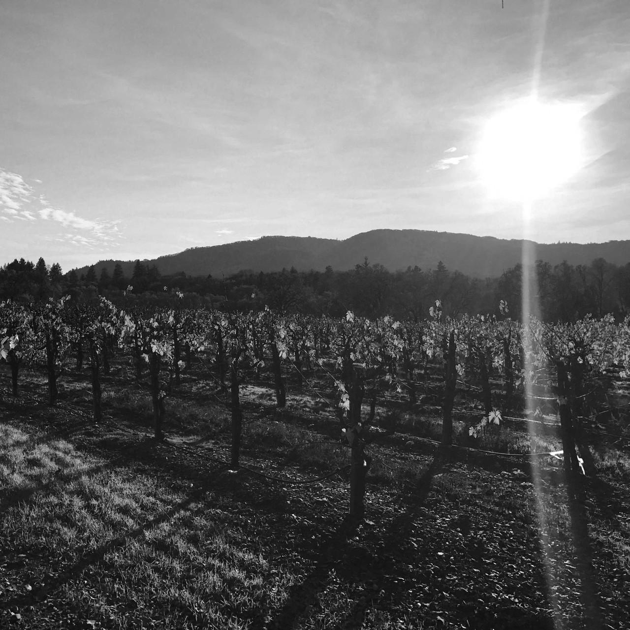 Fox Hill Vineyard