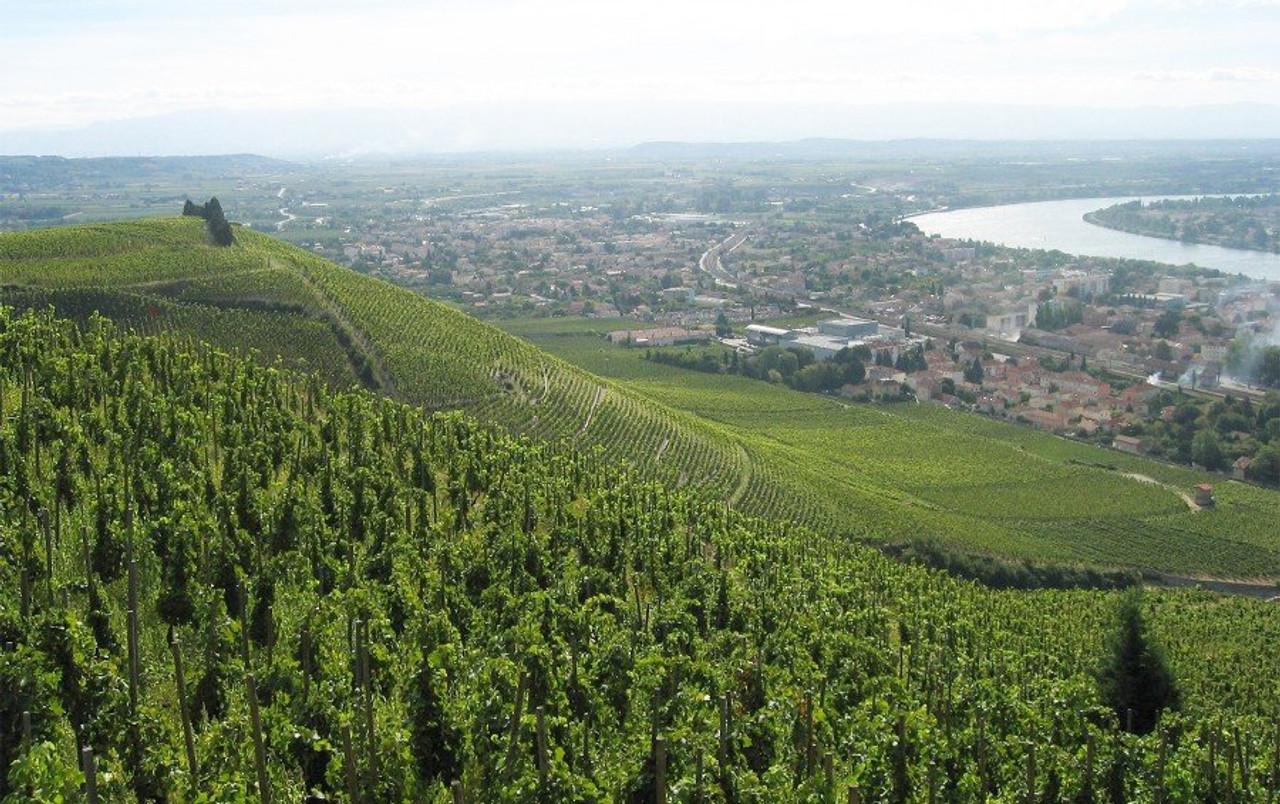 Hermitage Vineyard