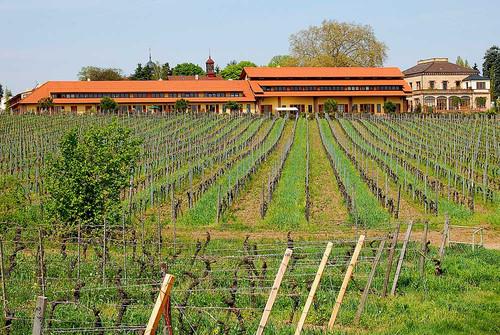 Wachenheim: Heart of Mittelhaardt