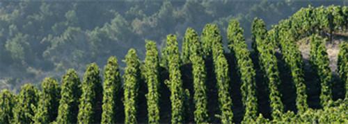 Apalta Vineyard