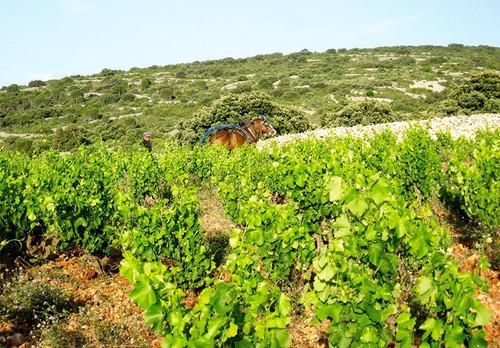 Bila Haut Lesquerda Cotes du Rous Villages 2014 (Wine Club Wine)