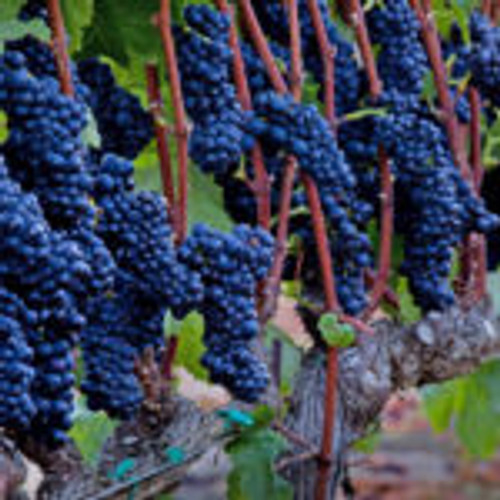 "Roar, ""Sierra Mar Vineyard"" Santa Lucia Highlands Pinot Noir 2017"