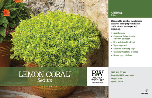 Sedum Lemon Coral® 2 Gallon