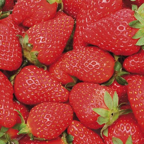 Strawberry Papa Joe's 3.5 Inch