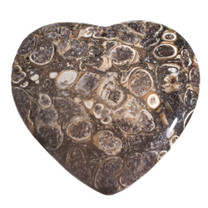Turritella Agate Heart (Wyoming)