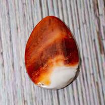 Spiny Oyster Shell( Baja California) SPO03