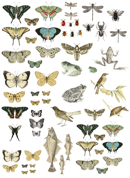 IOD Colored Decor Transfer™ Entomology Etcetera 24x33