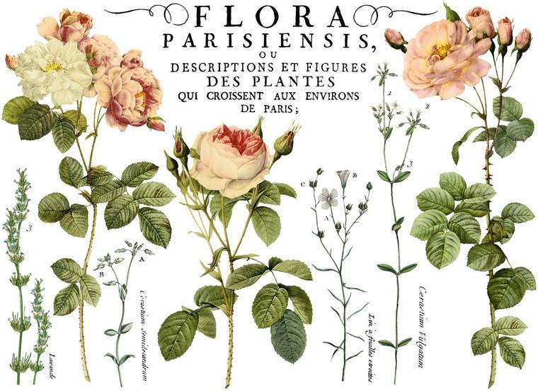 IOD Colored Decor Transfer™ Flora Parisiensis 24x33