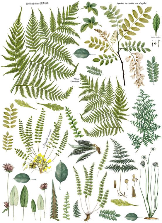 IOD Colored Decor Transfer™ Fronds Botanical 24x33