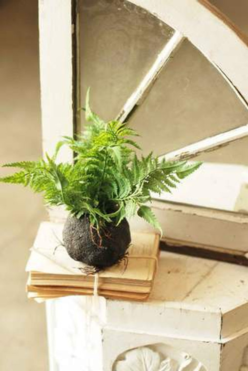 """10"""" Rooted Lady Fern"""