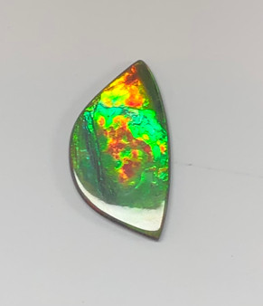 42 x 23 Two to Three Color Natural Free Form Ammolite Gemstone GXM828