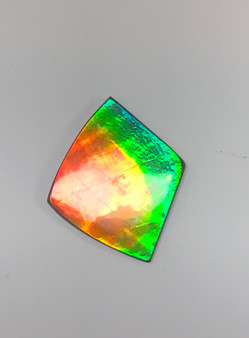 46 x 39 Two to Three Color Natural Free Form Ammolite Gemstone GXM51