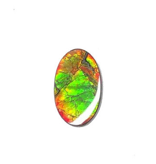 27 x 17 Two Color Natural Free Form Ammolite Gemstone GXM3807