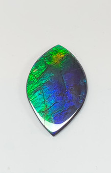 42 x 28 Two to Three Color Natural Free Form Ammolite Gemstone GXM33