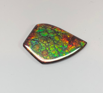 46 x 39 Two Color Natural Free Form Ammolite Gemstone GXM3808