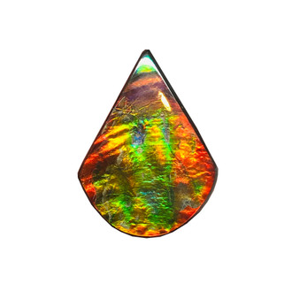 45 x 33 Two to Three Color Natural Free Form Ammolite Gemstone GXM47