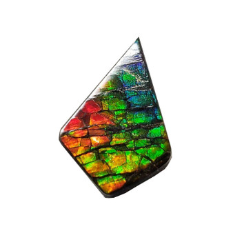 14x21 Ammolite Canada's Opal Natural Free Form 3 Color Red Green & Blue Gemstone