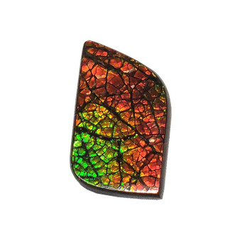 19x31 Ammolite Canada's Opal Rectangular Form 3 Color Red Green & Gold Gemstone