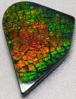 21x28 Ammolite Canada's Opal Natural Free Form 3 Color Red Green & Gold Gem