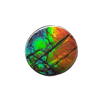 12x12 Ammolite Canada's Opal Round Shape Triplet 3 Color Green Red & Orange Gem