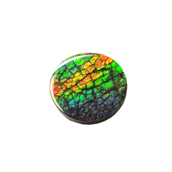 22x22 Ammolite Canada's Opal Roud Form 3 Color Green Blue & Red Gem